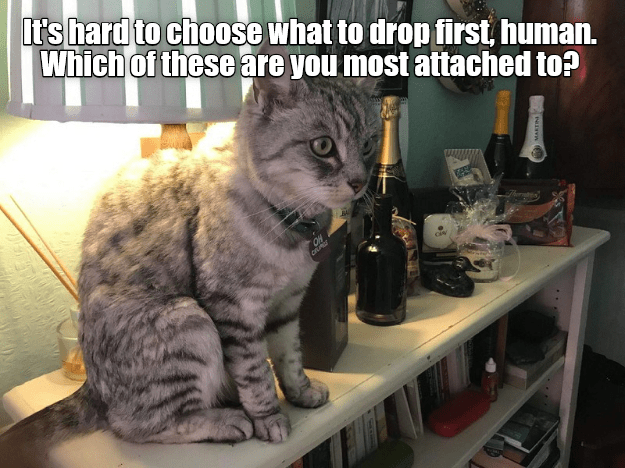 funny cat meme of a cat considering which items to drop first