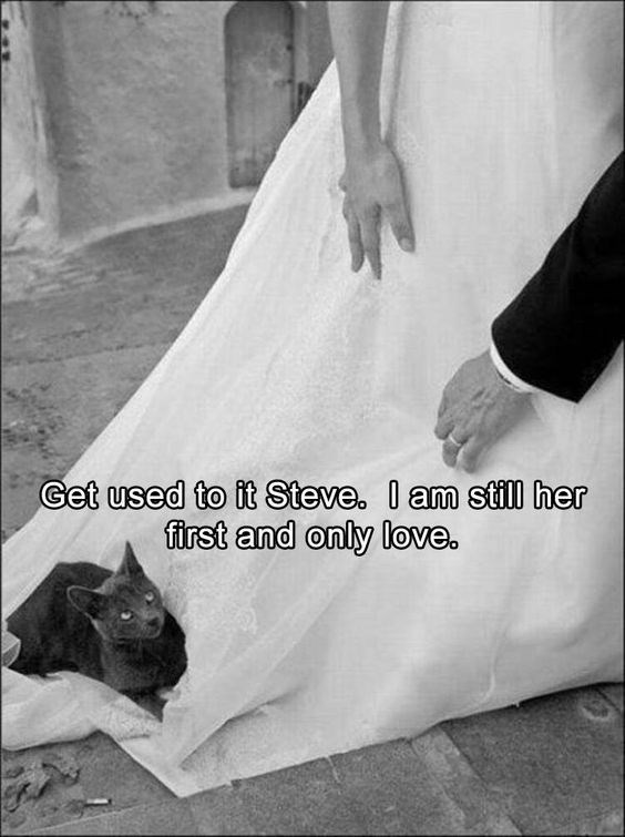 Cat on a wedding dress, while bride is wearing it.