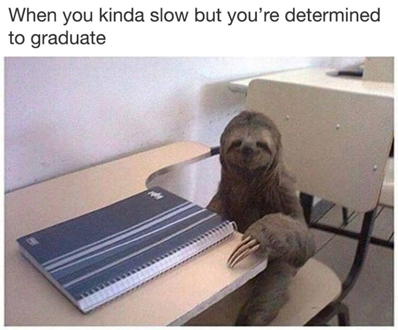 Funny meme about being slow but determined to finish school, picture of a sloth.