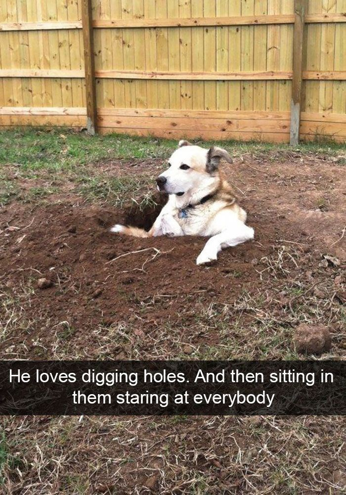 dog hiding in the ground from his problems