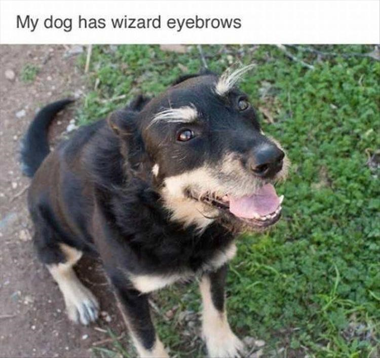 Thrusday meme with pic of dog with wild bushy eyebrows