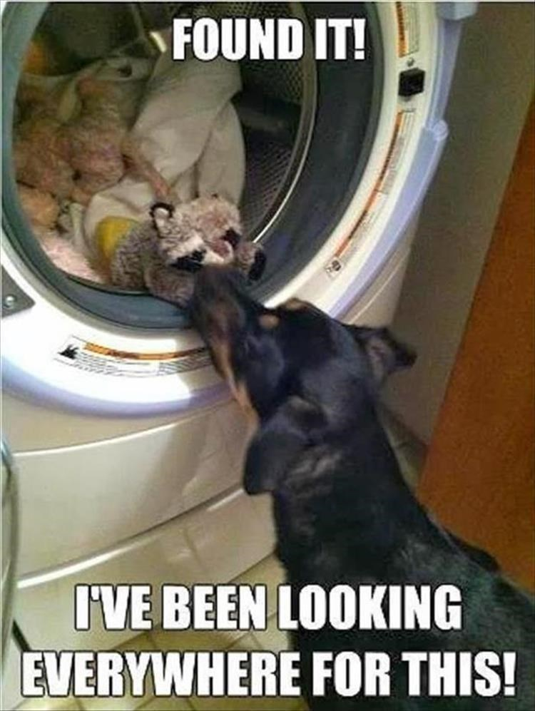 Thrusday meme about dog finding its lost toy in the laundry