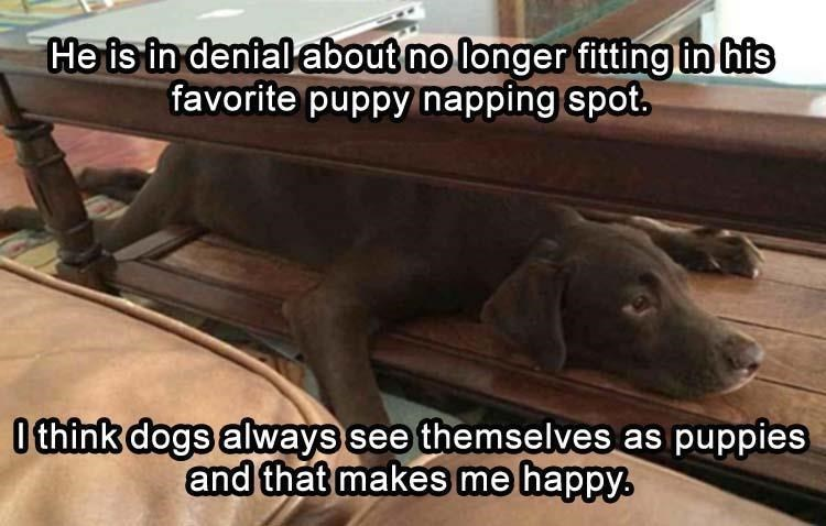 Thrusday meme with pic of dog getting too big for his napping spot but refusing to give up on it