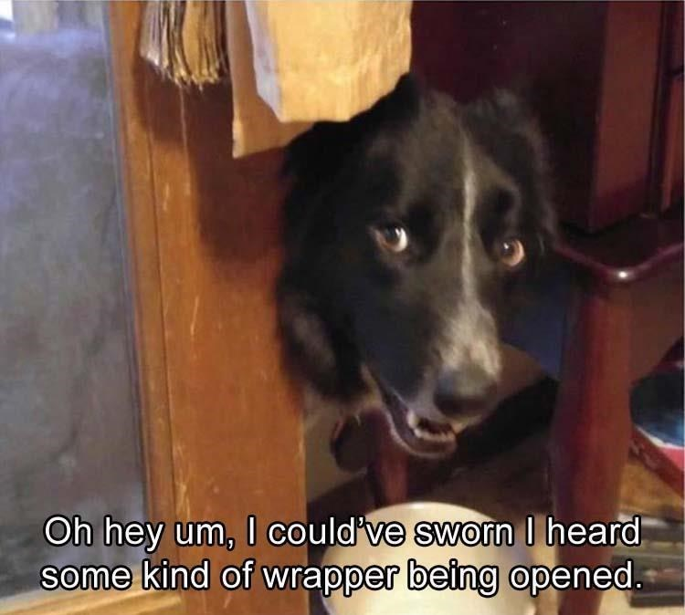 Thrusday meme of dog sheepishly begging for snacks when it hears the sound of wrappers