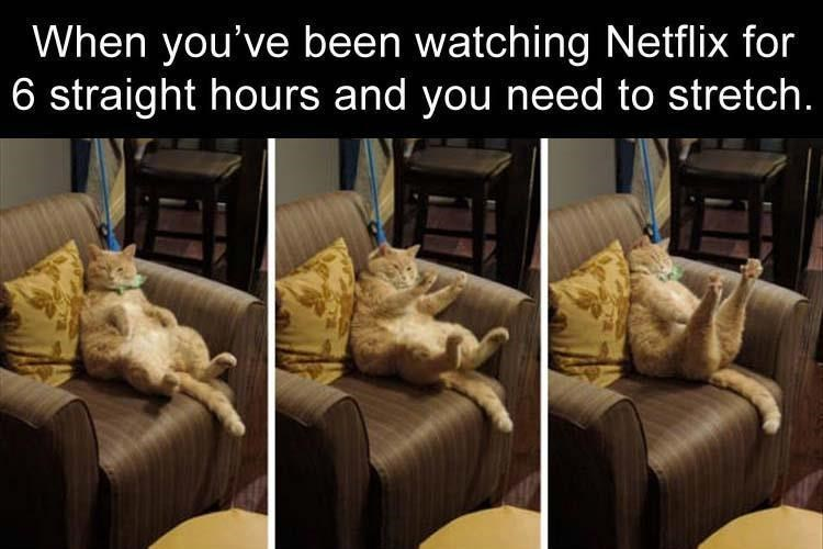 Thrusday meme about watching too much Netflix with pic of cat lazily stretching its legs