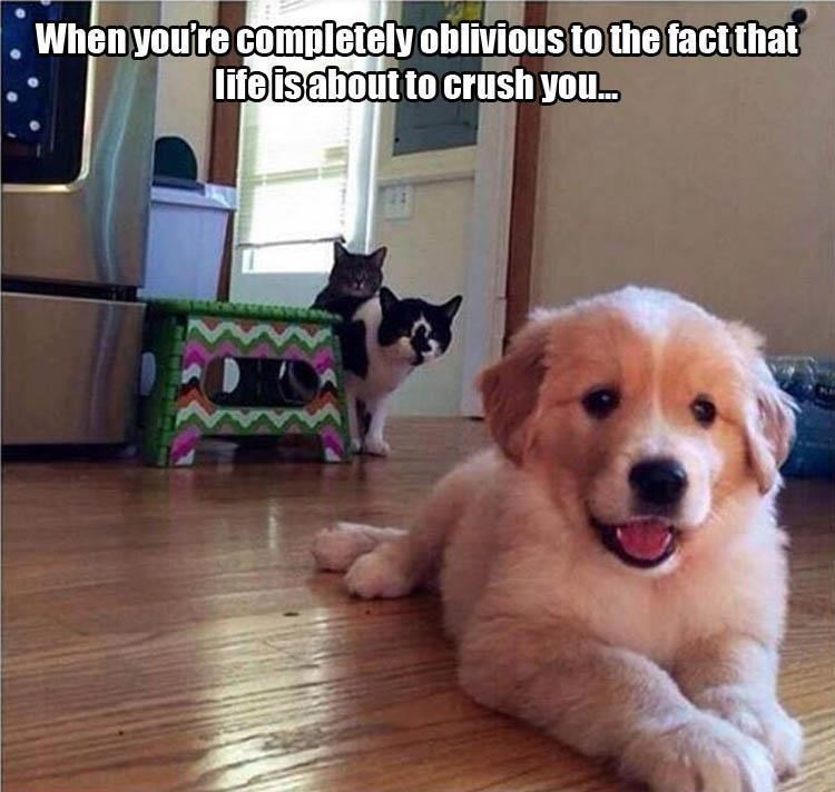 Thrusday meme with pic of happy puppy getting stalked by two cats