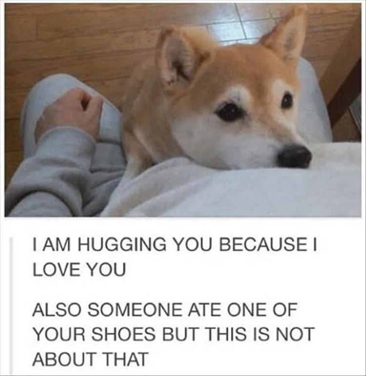 Thrusday meme with pic of dog hugging its owner after eating a shoe