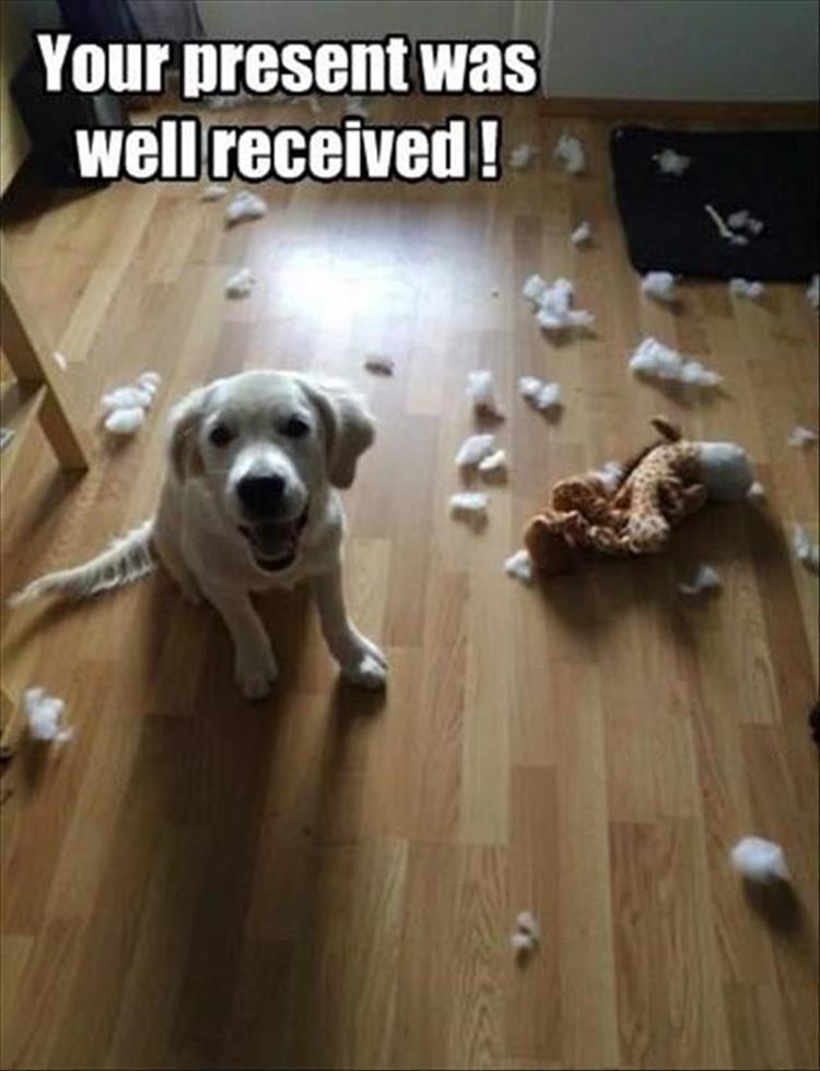Thrusday meme with pic of puppy sitting happily next to destroyed toy