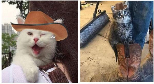 Cats cute cats cowboy hat cat photos cowboy animals - 9079557
