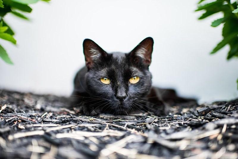 cat moods - Cat