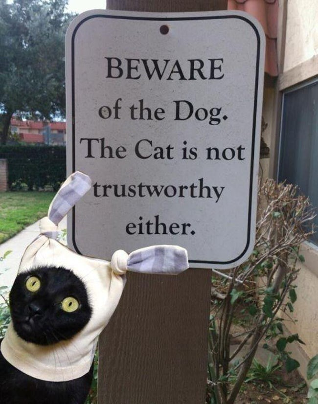 Sign - BEWARE of the Dog. The Cat is not trustworthy either.