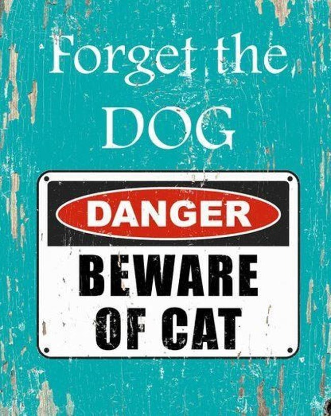Font - Forget the DOG DANGER BEWARE OF CAT