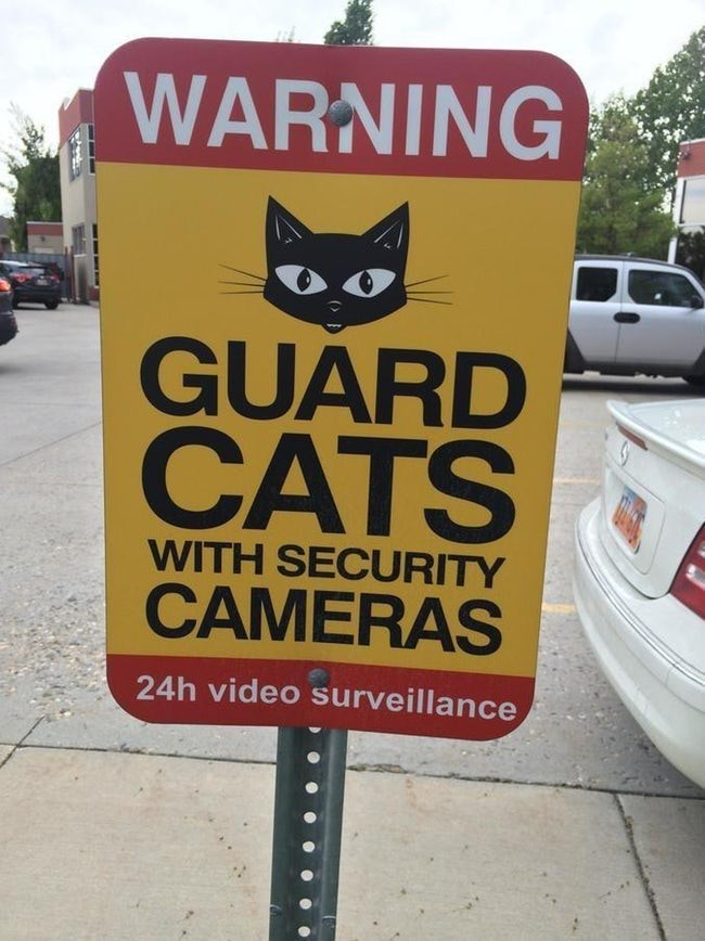 Cat - WARNING GUARD CATS WITH SECURITY CAMERAS 24h video surveillance