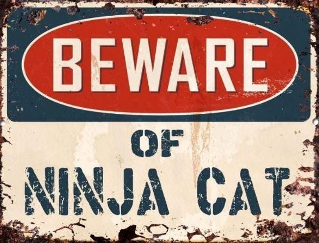 Font - BEWARE OF NINJA CAT