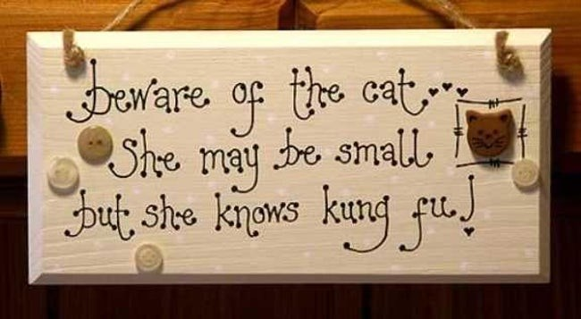 Font - eware op he cat She may be small, , she kpws kung fut