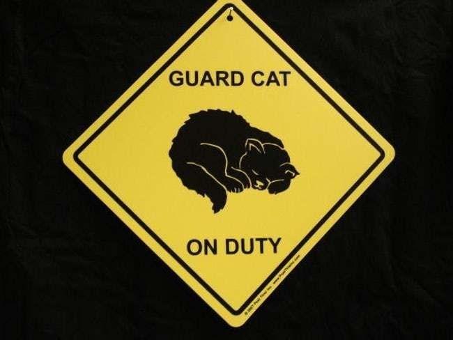 Logo - GUARD CAT ON DUTY