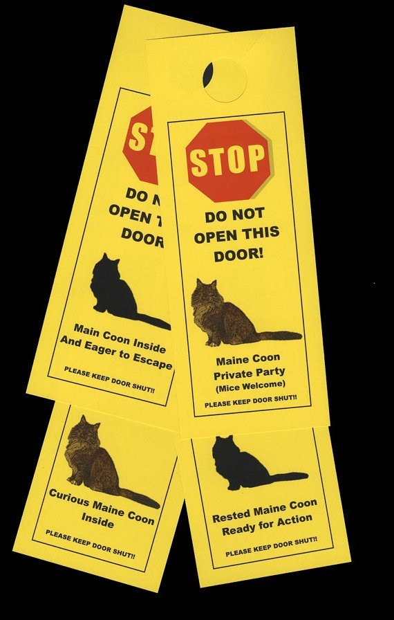 Rat - STOP DO N OPEN DO NOT DOOR OPEN THIS DOOR! Main Coon Inside And Eager to Escape Maine Coon Private Party (Mice Welcome) PLEASE KEEP DOOR SHUT!! PLEASE KEEP DOOR SHUT!! Curious Maine Coon Rested Maine Coon Inside Ready for Action PLEASE KEEP DOOR SHUTI PLEASE KEEP DOOR SHUT!
