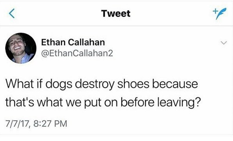 Funny tweet meme about why dog's destroy shoes.