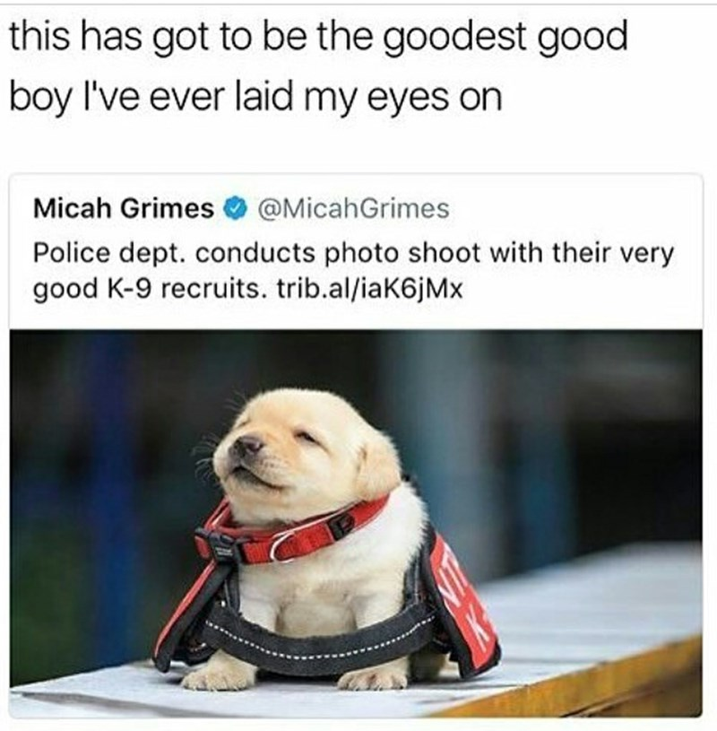 Good boy k-9 recruit - 3jd8funny