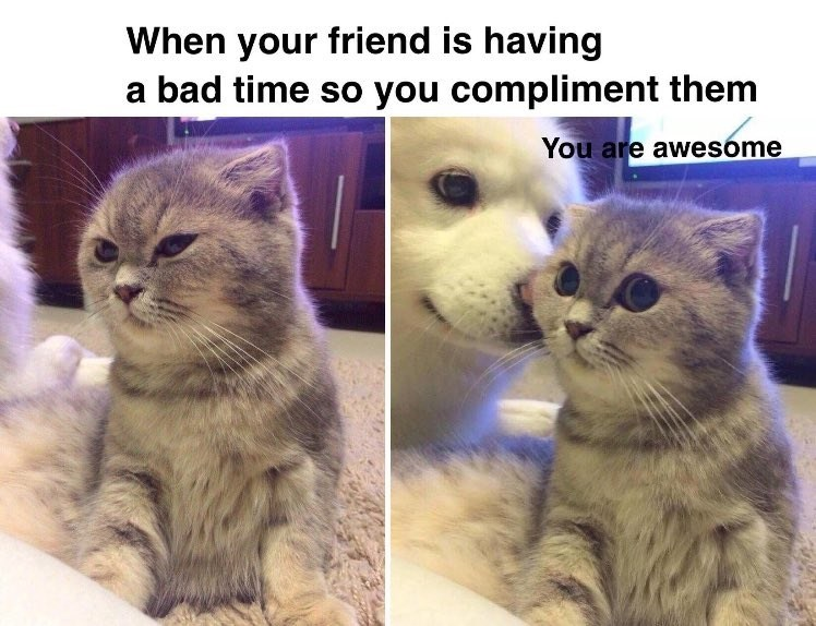 Meme of dog and cat getting along with caption about how friends complement each other when one is having a bad time.