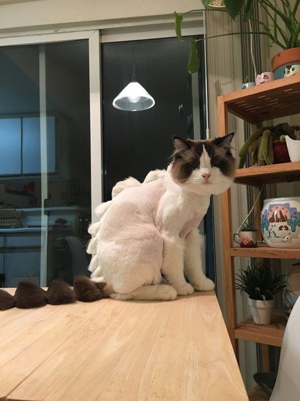 Cat - .6