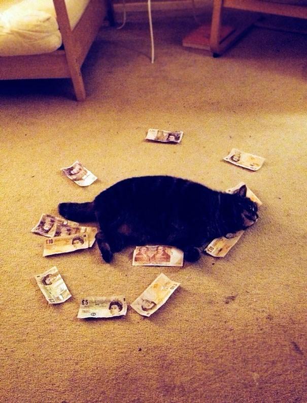 Cat - E10 £5