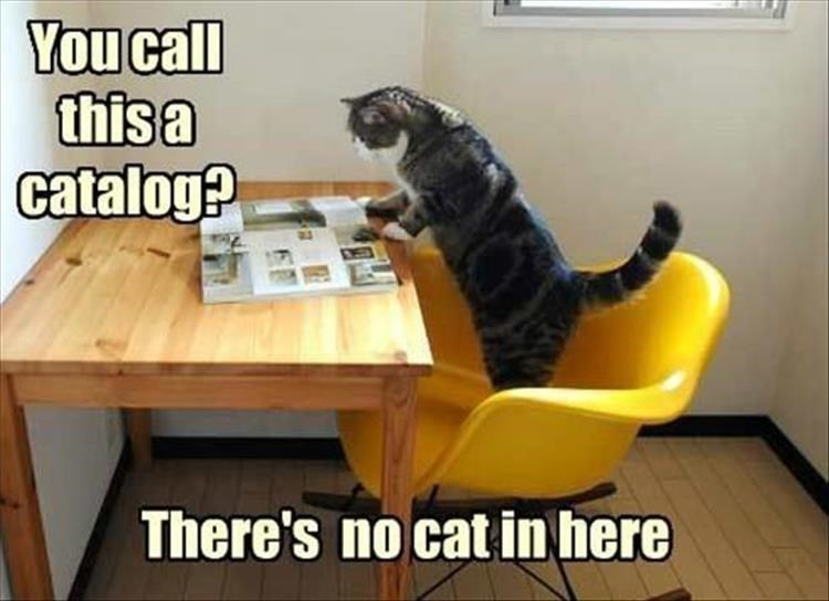 Funny cat meme of kitteh looking for the CAT in CATALOG