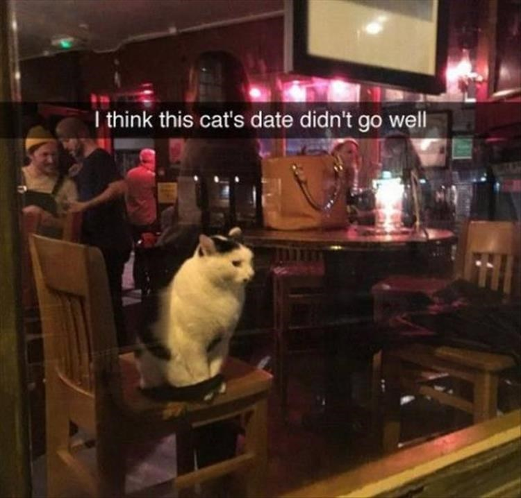 Funny picture of a cat in a bar that looks like his date didn't go well.