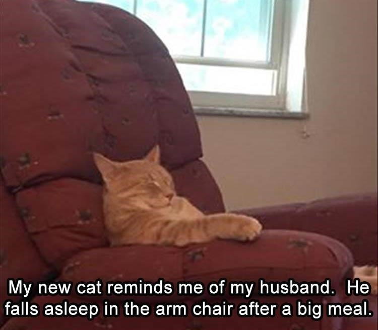 Lazy cat meme of kitty that reminds woman of her husband