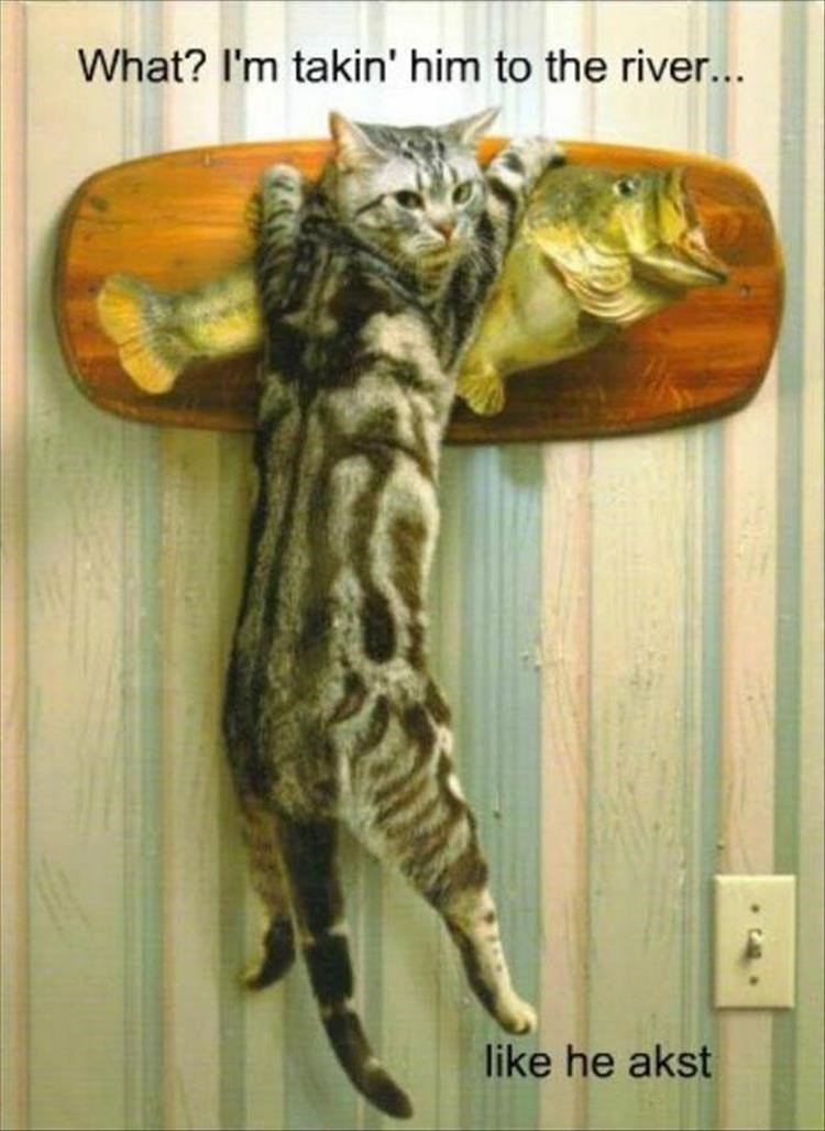 Cat hanging onto singing fish fixture, with caption joking that he gonna take him to the river like he asked.