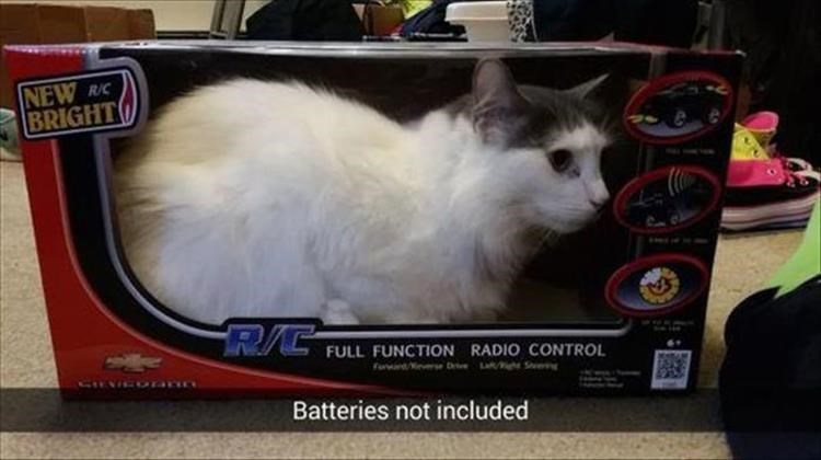 Cat in a toy box snapchat joking that batteries are not included.