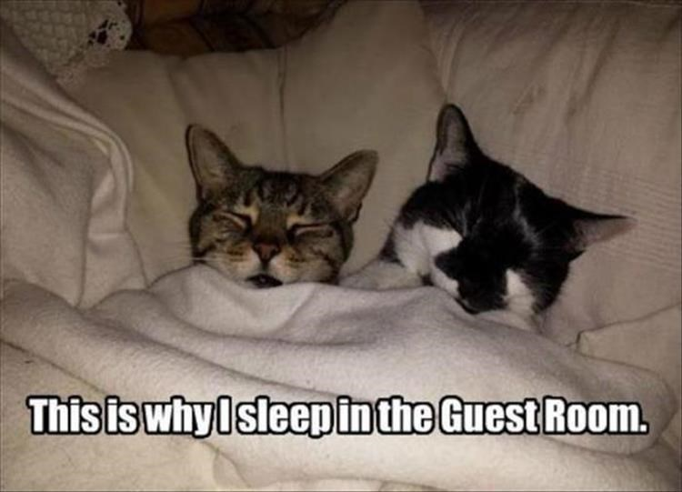 cats napping in the guest room