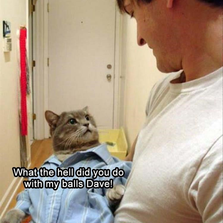 Cat wearing pajamas wondering what happened to his balls.