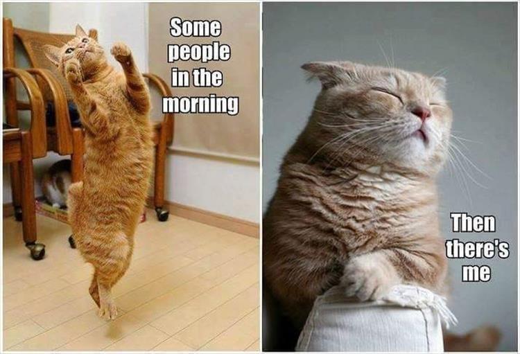 Cat meme of morning people vs YOU