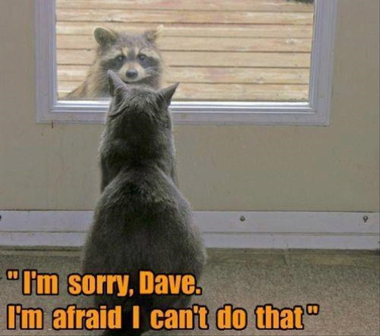 Cat having make believe conversation with Dave, the Raccoon.