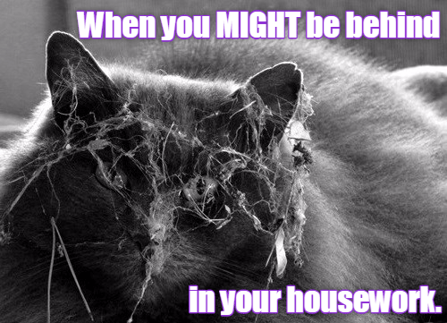 cat memes - Snout - When you MIGHT be behind in your housework.