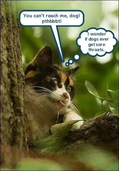 cat memes - Cat - You can't reach me, dog! pthbbbt! wonder if dogs ever getsore throats.