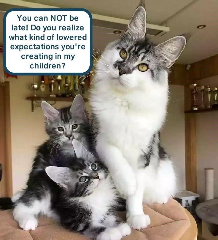 cat memes - Cat - You can NOT be late! Do you realize what kind of lowered expectations you're creating in my children?