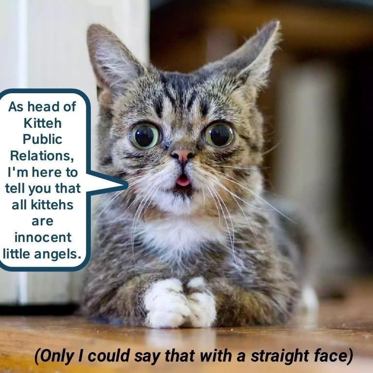 cat memes - Cat - As head of Kitteh Public Relations, I'm here to tell you that all kittehs are innocent little angels. (Only I could say that with a straight face)