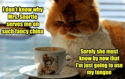 cat memes - Cat - Odontknowwhy Mrs.Snortle serves me o Such fancy china Surely she must know by now that I'mjust going touse my tongue