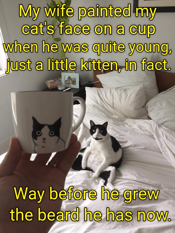 cat memes - Photo caption - My wife painted my cat's face ona cup when he was quite young, just a little kitten, in fact. Way before he grew the beard he has now.