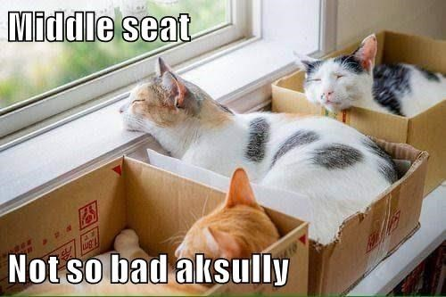 cat memes - Cat - Middle seat Not so bad aksully