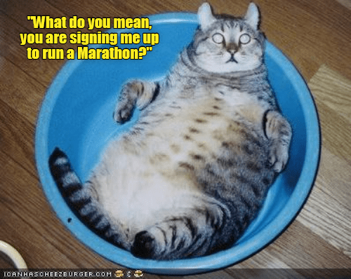 "cat memes - Cat - ""What do you mean, you are signing me up to run a Marathon?"" ICANHASCHEEZEURGER OOM"