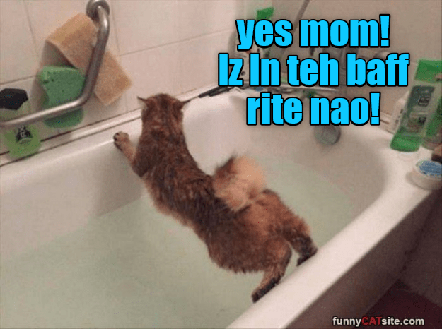 cat memes - Photo caption - yes mom! 1in teh baff rite nao! funnyCATsite.com