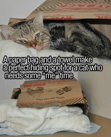 "Cat - Apaper bag and a towel make apertect hiding spot for a cat who needs some ""mefime"