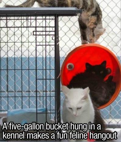 Cat - Afive-gallon bucket hung in a kennel makes a funfeline hangout