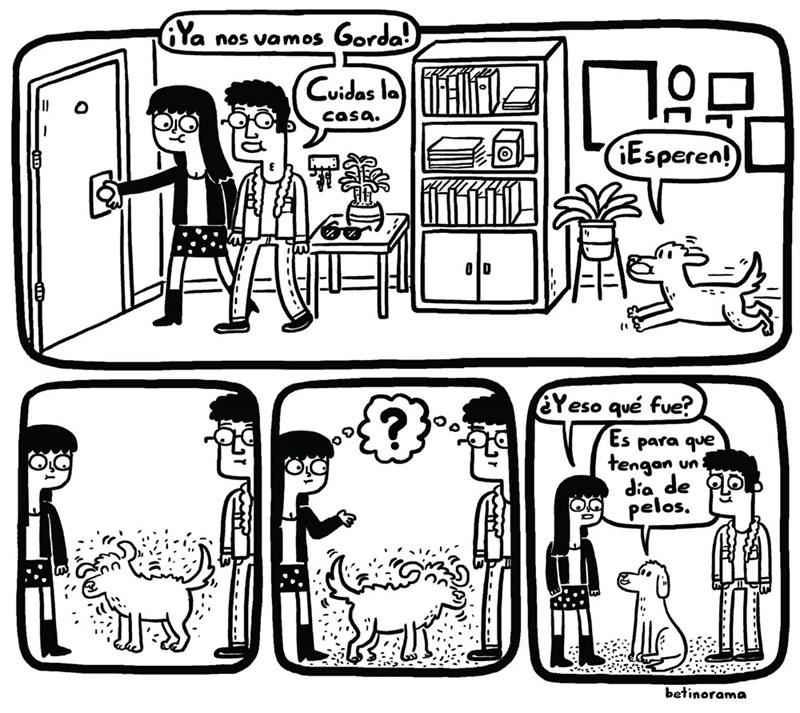 perro le deja los pelos a sus amos que salen a trabajar