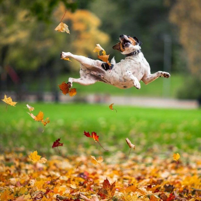 dogs loving fall - Jumping