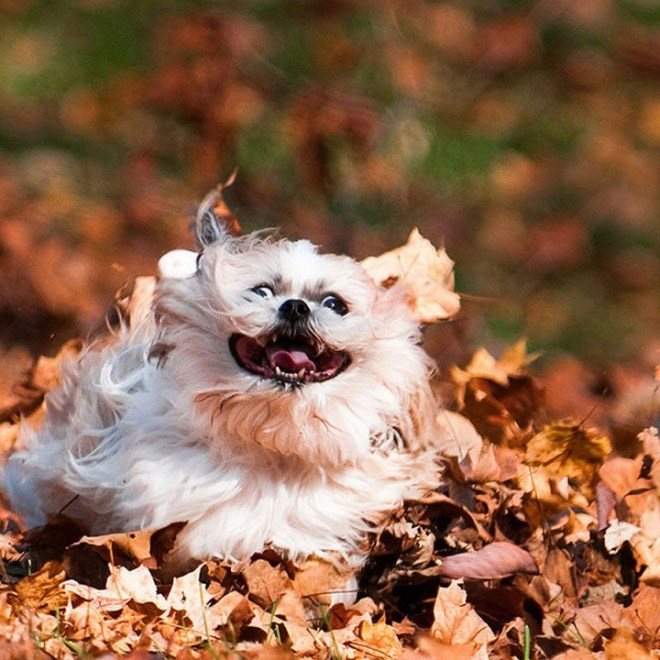 dogs loving fall - Vertebrate