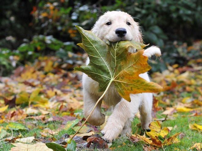 dogs loving fall - Dog
